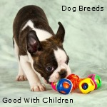 List and Discussion of Small Dog Breeds that are Good with Children