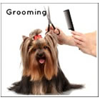 General Information on Grooming a Small Dog Yourself
