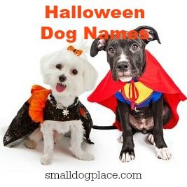 Halloween Dog Names Thumbnail