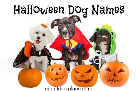 Halloween Dog Names Which Spooky One Will You Choose