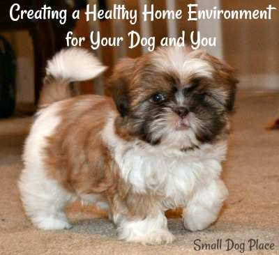 Creating a Healthy Home Environment for Your Dog and You