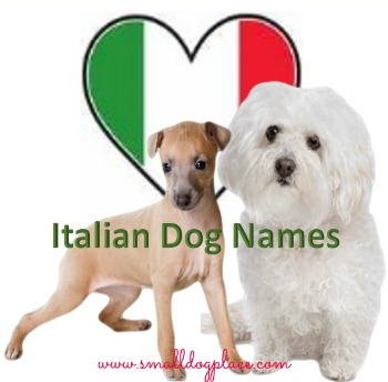 Italian Dog Names for your little one from Italy.