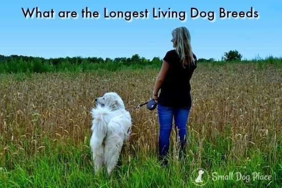 What are the Longest Living Dog Breeds?