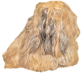 How to remove mats from your dog's hair coat.