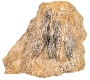 Matted Dog Ten Tips For Removing Mats From Your Dog S Coat
