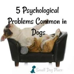 5 Psychological Problems Common in Dogs Link