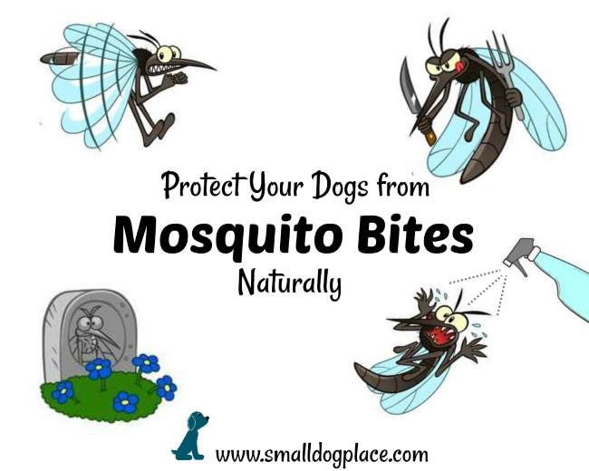 Mosquito Bites on Dogs