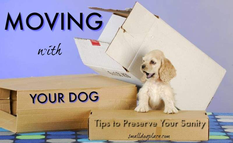 Moving with Your Dog:  Header Image