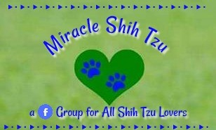 Miracle Shih Tzu Facebook Group