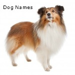 Extensive list of dog names for that new small dog.