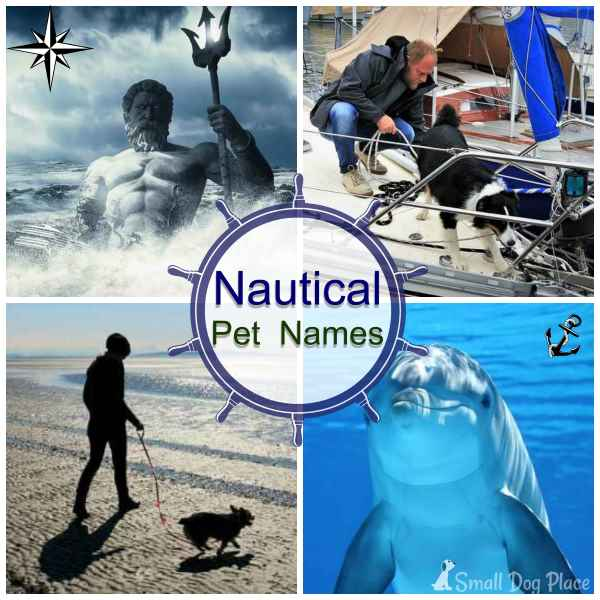 Dog Names with a Nautical Twist
