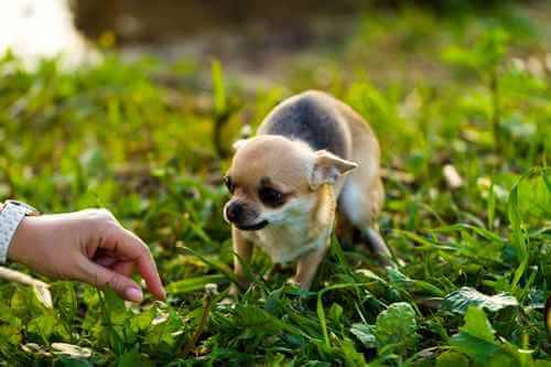 Nervous Dog or Puppy
