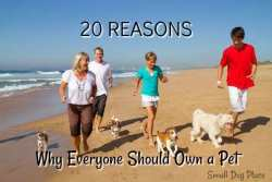 Four people are walking on a beach with their dogs with link to the article