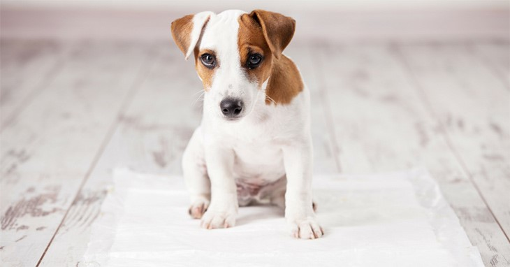 Stop your dog from peeing in the house