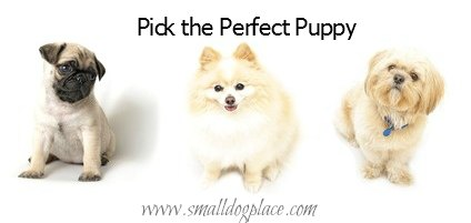 Choose the perfect puppy