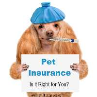 Pet Insurance:  Is it right for You.