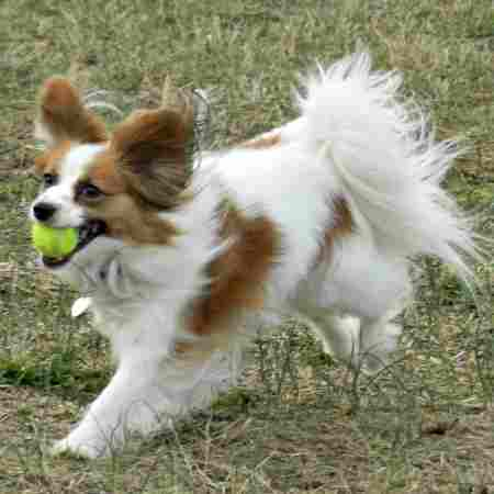 Puppy Behaviors:  Playing Fetch