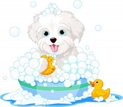 How To Bathe A Dog