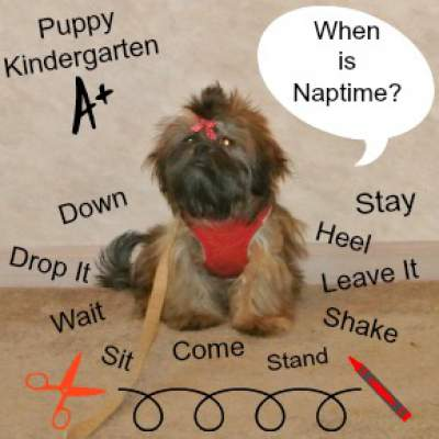What to Expect at Puppy Kindergarten