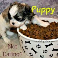 Is Your Puppy Not Eating?