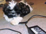 Puppy should not be chewing on your computer cords