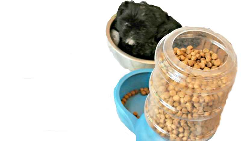 Measure out portions of food to help save on puppy supplies.