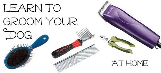 Save Money by Learning to Groom at Home
