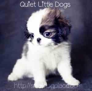 ... Dog Breeds In Alphabetical Order Short Hair Small Dog Breeds Good Dog