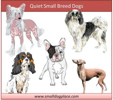 Quiet Small Breed Dogs