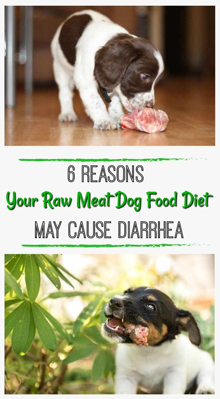 Raw Dog Food Diet Image
