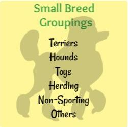 Small Breed Groups