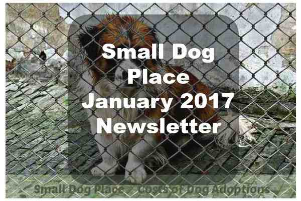 Small Dog Place January 2017 Newsletter
