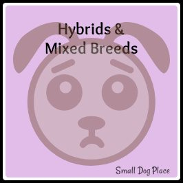 Small Dog Hybrids