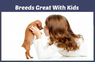 Small Dogs that make great pets for children.