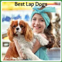 Best Lap Dogs