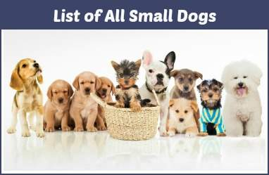 A comprehensive list of all purebred small dogs.