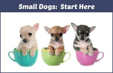 Small Dogs:  An Introduction to all things about small breed dogs.