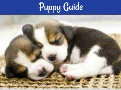Small Puppy Dog Care