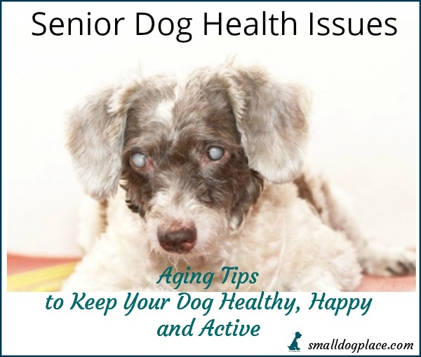 Senior Dog Health Tips