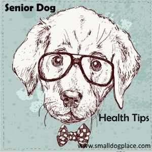 Senior Dog Health Tips Link