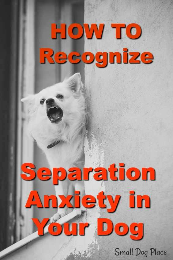 How to recognize Separation Anxiety in dogs at Small Dog Place
