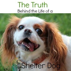 The Life of a Shelter Dog