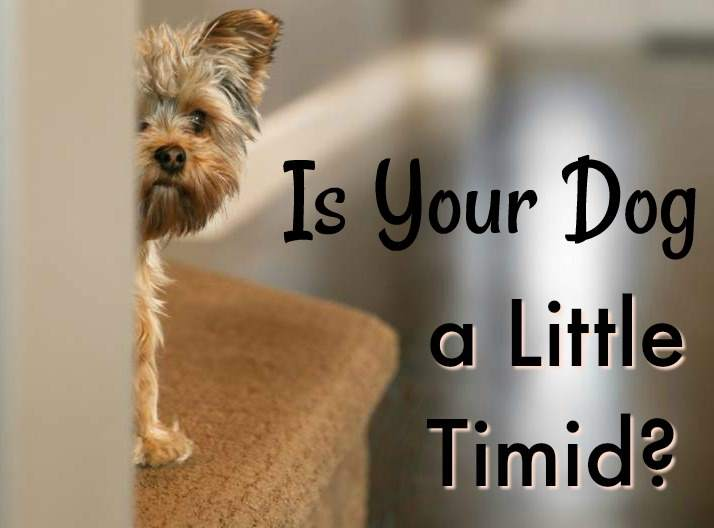 Is your dog a little timid?
