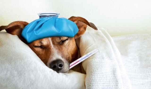 When your puppy is ill, you want them to take baby-medicine
