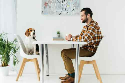 Definitive signs that your dog is actually your baby, She has her own place at the dining table