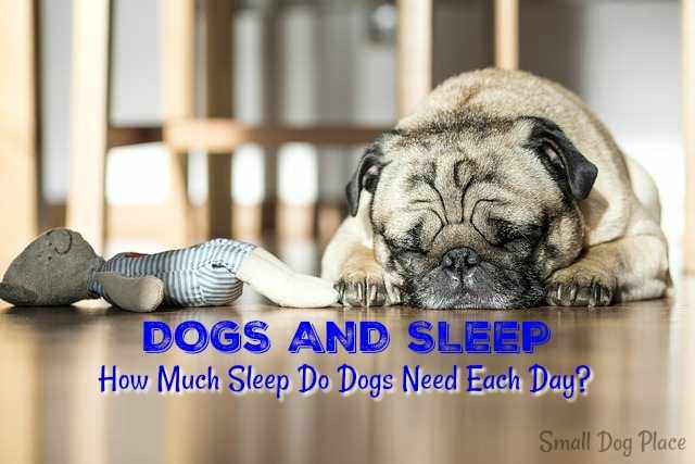 Dogs and Sleep:  How Much Sleep Do Dogs Need each Day?
