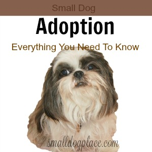 Guide to Small Dog Adoptions