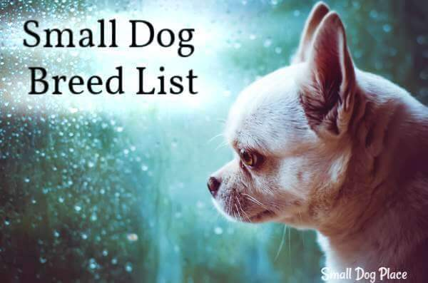 All Small Dog Breed List: A -Z: 90 Tiny Dogs, Pictures