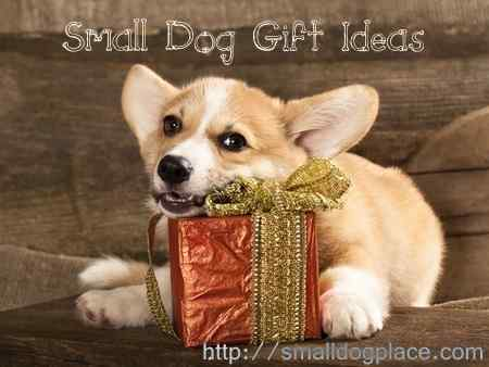 Small Dog Gift Ideas