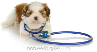 Small Dog Health Resources